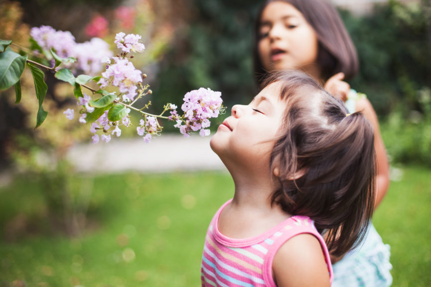 Toddler girl smelling flowers In garden