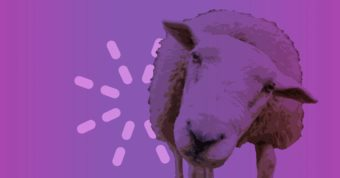 Meet An Amazing Animal in the Parable of the Lost Sheep