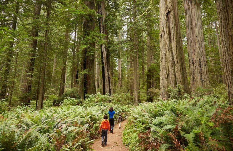 children walking in forest