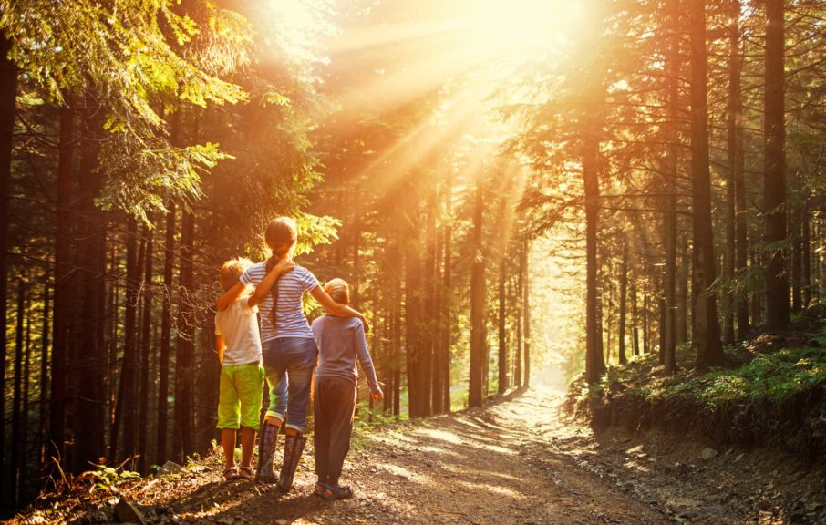 Kids watching beautiful sun beams in forest