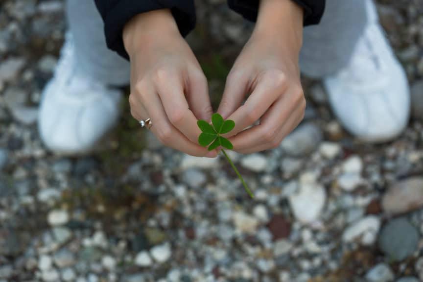 leaf clover in Nature