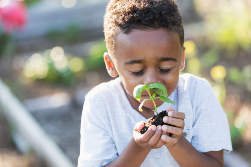 Little boy in garden, smelling fresh herbs